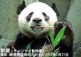 male-panda.jpg