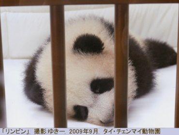 yuki-003.JPG
