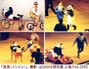 zatugidan-panda.jpg